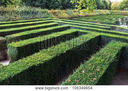 Green Maze Of Schonbrunn Palace Garden, Vienna