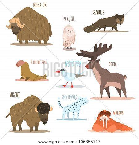 Arctic and Antarctic Animals, Birds. Vector Illustration