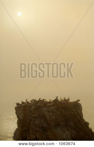 Island Off The Coast Of Pismo Beach California In Misty Haze Of