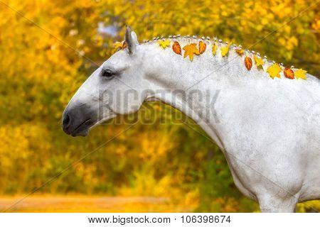 White horse in autumn park