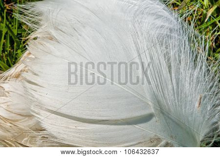 White Bird's Feather