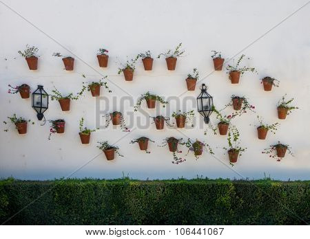 Flowers In Pots In Palacio De Viana Cordoba