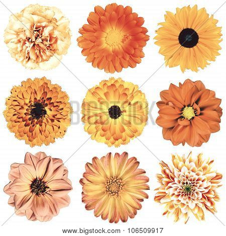 Various Vintage Retro Flowers Selection Isolated On White