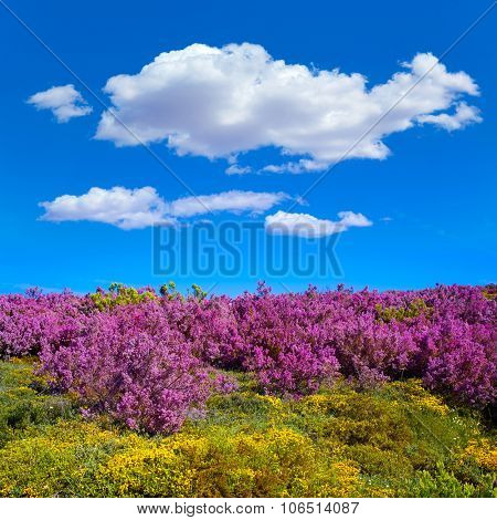 The way of Saint James in Leon Bierzo pink flowers mountains to cruz de Ferro
