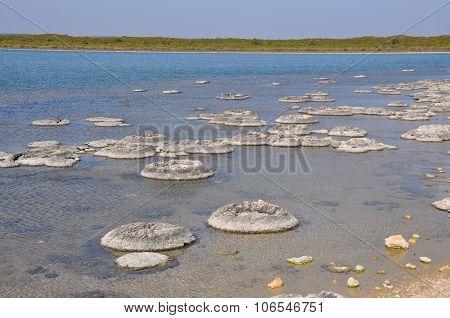 Stromatolites: Lake Thetis Landscape