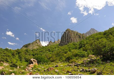 Mountains with green bush