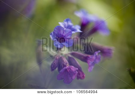 Pink And Blue Bell Flowers