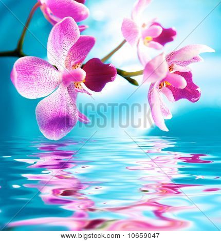 Picture of a beautiful orchid flowers reflected in water
