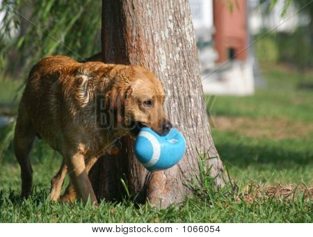 Dog Playing 5