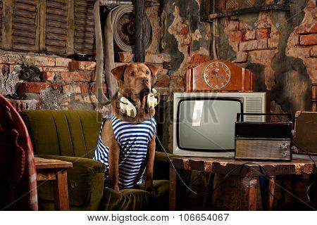 dog radioman in retro style