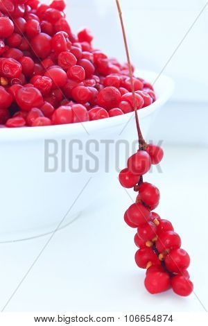 Branches And Full Plate Of Red Ripe Schisandra Isolated