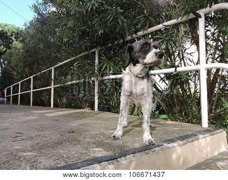 White & black dog waiting for a master, summer background