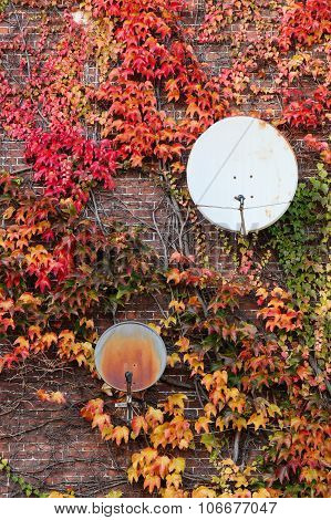 Parabolic antennas on a wall with autumn colors