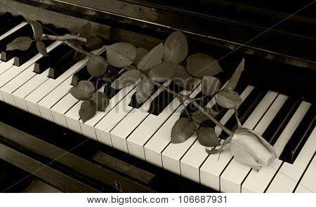 Condolence Card - Rose On Piano
