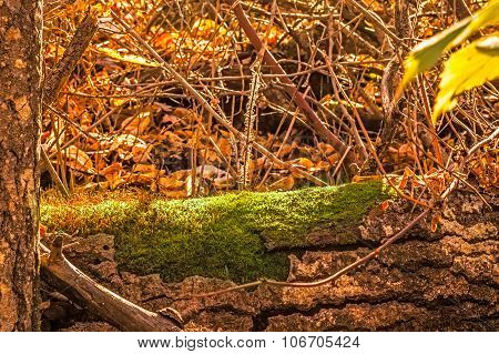 Fallen Log Covered In Moss