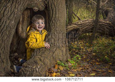 Plying In The Dark Autumn Forest