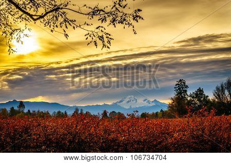Sunrise over Mount Baker and Blueberry Fields
