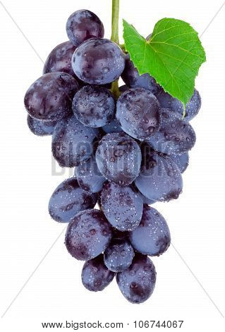 Fresh Blue Grapes Hanging Isolated On A White Background
