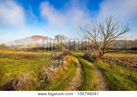 Rural Landscape With Road Through Agricultural Meadow In Fog
