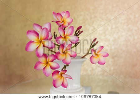 Sweet beautiful fragrant flower frangipani (plumeria) in vintage white vase