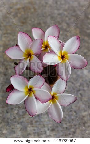 Lovely fresh charming flower plumeria or frangipani with soft view and mood
