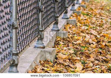 Fragment Of An Iron Fence And Lot Foliage