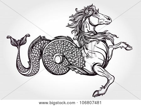 Hippocampus or Kelpie illustration.