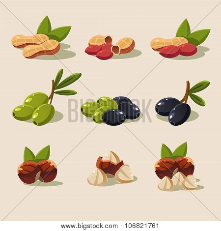 Olives and Nuts Vector Illustration Modern Design