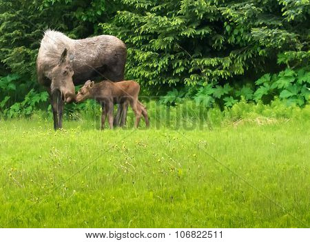 Moose Mom And Kid Touching Noses