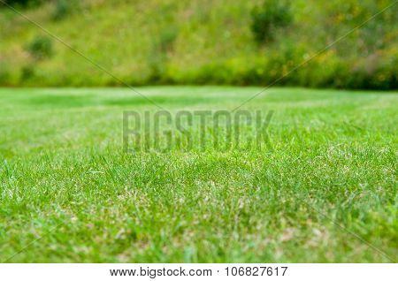 Neat lawn background
