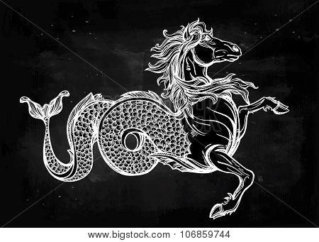 Hippocampus or Kelpie illustration.