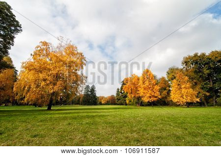 Lawn In The Autumn Park