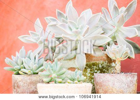 Cactus Plants In Minimal Garden