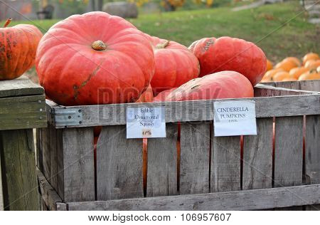 Cinderella pumpkins for sale a t a farm in Massachusetts in Fall. poster