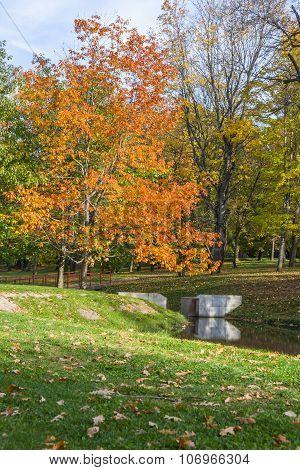 Oak Tree In The Autumn Park