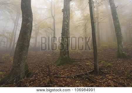 Mysterious Autumn