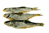 Three salted and dried big fishes (on a white background) poster