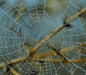Tiny dewdrops  on fine cobweb in the morning poster