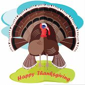 turkey bird for happy Thanksgiving celebration, with a loose tail, poultry agriculture, chicken farm. the main dish of thanksgiving, a family celebration. vector graphic, funny illustrations, cartoon poster