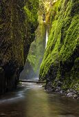 Oneonta gorge trail in Columbia river gorge Oregon. poster