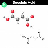 Succinic acid molecule, succinate structural chemical formula and model, 2d & 3d vector isolated on white background, eps 8 poster