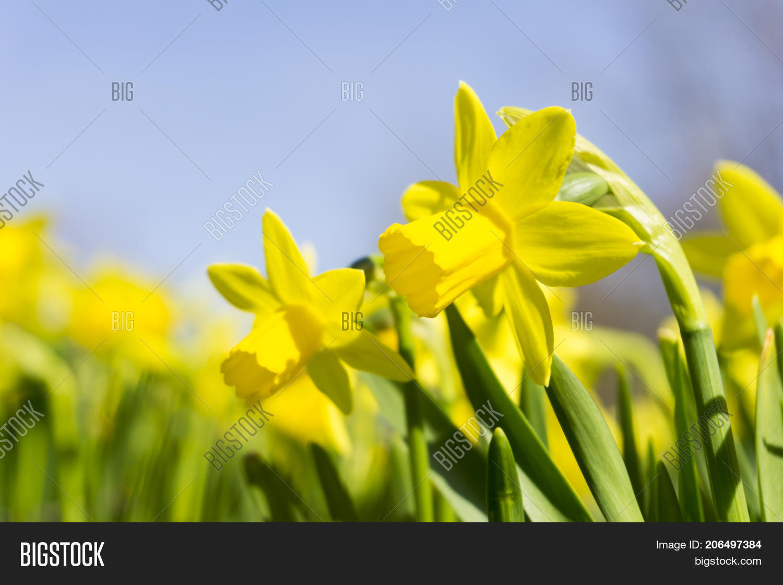 Close Beautiful Image Photo Free Trial Bigstock