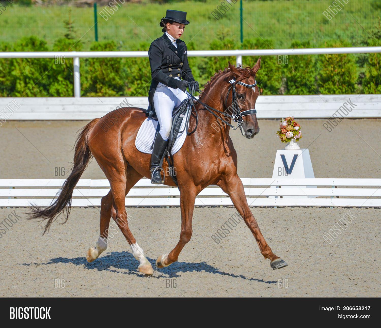 Young Elegant Rider Image Photo Free Trial Bigstock