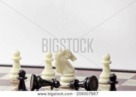 chess white horse wins pawns. concept of struggle. isolated on white background