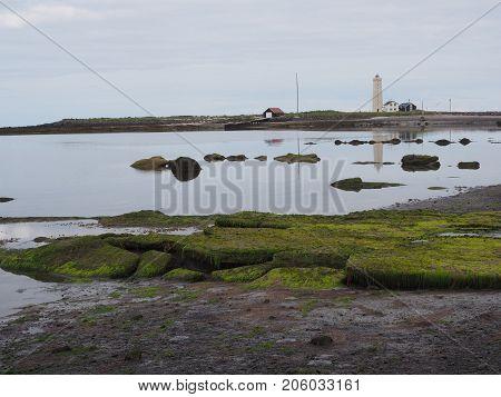Low tide and exposed green algae on Grotta island, Reykjavik, Iceland