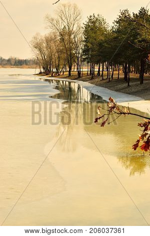 Frozen shore of lake and trees on the shore in winter.