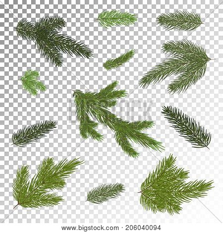 A set of Christmas tree branches for a Christmas decor. Branches close-up. Vector. Drawing. Nature .