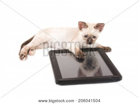 Adorable siamese kitten lying behind a tablet computer, on white