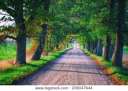 A dirt road in the alley of old oaks with a sunny autumn day