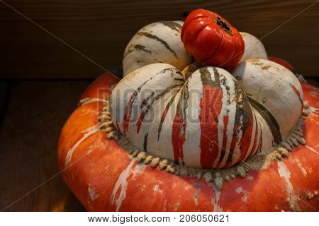 Red Pumpkin Of Incredible Shape With A Tomato